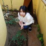 マーメイドル農園・花壇